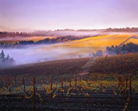Bilder Acker Morgendämmerung und Sonnenuntergang Herbst Weinberg Nebel Natur