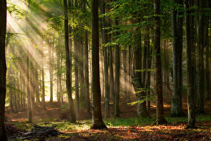 Fotos Wälder Bäume Lichtstrahl