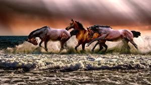 Pictures Horses Waves Three 3 Run Water splash animal