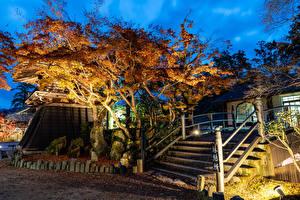 Photo Japan Parks Autumn Evening Trees Stairs Foliage Shiga Nature
