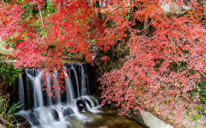 Pictures Japan Parks Waterfalls Branches Cliff Shiga