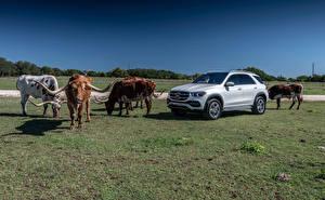 Hintergrundbilder Mercedes-Benz Rinder Silber Farbe Horn 2019 GLE 450 4MATIC Autos Tiere