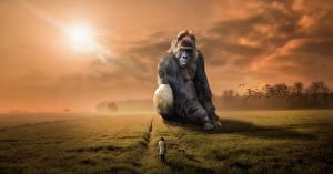 Hintergrundbilder Affen Acker Gras Sitzend Fantasy Tiere