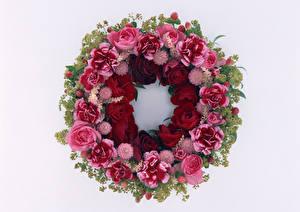 Papel de Parede Desktop Rosa Dianthus Fundo branco Design Flores