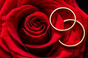 Pictures Roses Closeup Red Petals Ring Two Flowers