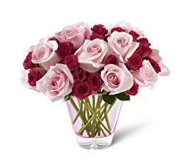 Hintergrundbilder Rosen Weißer hintergrund Vase Blumen