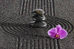 Fonds d'écran Pierres Orchidées Cercles zen Nature