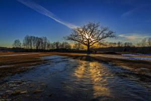 Fotos Sonnenaufgänge und Sonnenuntergänge Felder Bäume Natur