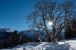 Fonds d'écran Suisse Hiver Bâtiment Montagnes Neige Arbres Rayons de lumière Alpes Braunwald Nature