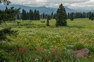 Photo USA Fields Grass Spruce Colorado Nature
