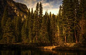 Hintergrundbilder USA Parks Wälder Küste Yosemite Fichten