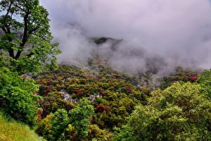 Bilder USA Park Wälder Kalifornien Nebel Bäume Sequoia National Park Natur