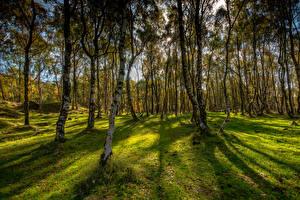 Fotos Vereinigtes Königreich Herbst Park Bäume Gras Bole Hill Derbyshire