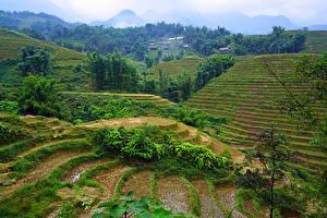 Fotos Vietnam Felder Hügel Muong Hoa Valley