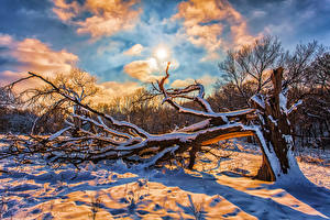 Wallpapers Winter Sky Snow Branches Sun Clouds Nature