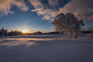 Papel de Parede Desktop Invierno Pôr do sol Neve árvores Raios de luz Naturaleza