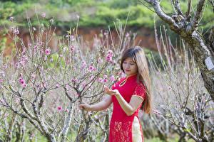 Hintergrundbilder Asiatische Garten Blühende Bäume Frühling Ast Braunhaarige junge frau
