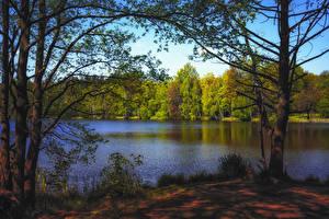 Bilder Herbst Wälder See Bäume