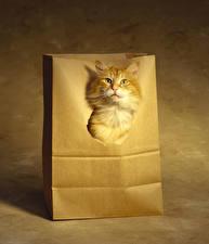 Hintergrundbilder Katze Orange rot Schnauze Tiere