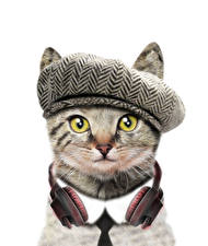 Picture Cats White background Funny Headphones Snout Animals