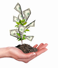 Wallpapers Creative Money Banknotes White background Hands Trees Soil