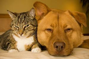 Bilder Hund Katze 2 Schnauze ein Tier
