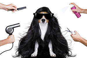 Pictures Dogs White background Hair Eyeglasses Jack Russell terrier Hands Hair dryer Animals