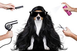 Fondos de escritorio Perros El fondo blanco Pelo Gafas Jack Russell Terrier Mano Secador de pelo Animalia