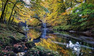 Bilder England Park Herbst Flusse Laubmoose Dartmoor Natur