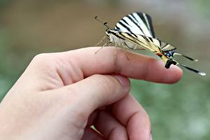 Image Fingers Butterflies Closeup Hands