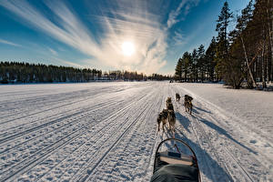 Pictures Finland Winter Sunrise and sunset Roads Dog Snow Northern Ostrobothnia Nature