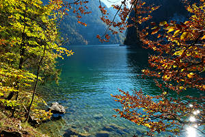 Image Germany Lake Autumn Stones Branches Konigsee Nature