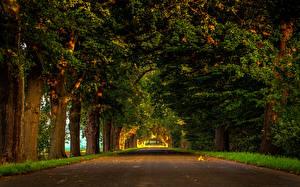 Sfondi desktop Germania Parchi Alberi Avenue Lenne Natura