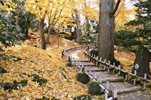 Wallpapers Japan Gardens Parks Autumn Leaf Trees Path Kenrokuen Garden, Kanazawa Nature