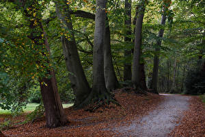 Bilder Niederlande Park Herbst Bäume Blatt Graaveland Natur