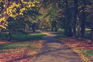 Hintergrundbilder Park Herbst Blatt Bäume Gehweg