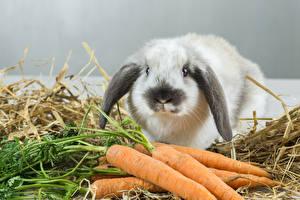 Bilder Kaninchen Mohrrübe ein Tier