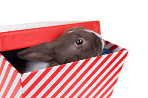 Pictures Rabbits White background Box Snout Animals