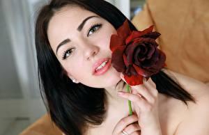 Bilder Rosen Brünette Blick Gesicht Mädchens