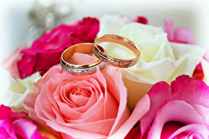 Picture Rose Closeup Jewelry ring Two Gold color Flowers