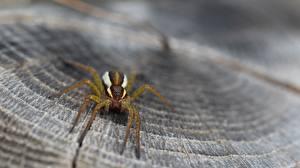 Fotos Webspinnen Makro Nahaufnahme ein Tier