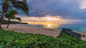 Bilder Sonnenaufgänge und Sonnenuntergänge Küste Tropen Palmengewächse Strand Reunion, Indian ocean