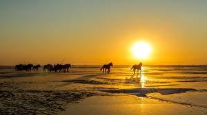 Bilder Sonnenaufgänge und Sonnenuntergänge Pferde Sonne Schnee Tiere