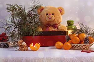 Pictures Teddy bear Mandarine Conifer cone Food