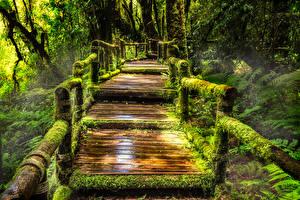 Hintergrundbilder Thailand Park Brücken Tropen Laubmoose Doi Inthanon National Park