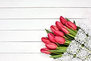 Hintergrundbilder Tulpen Rot Bretter Blumen