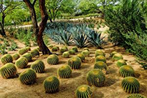 Bilder Vereinigte Staaten Kakteen Garten Sunnylands Rancho Mirage Natur