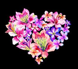 Fotos Valentinstag Inkalilien Frangipani Schwarzer Hintergrund Design Herz Blumen