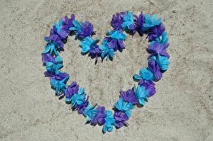Fotos Valentinstag Herz Design Blütenblätter Blumen