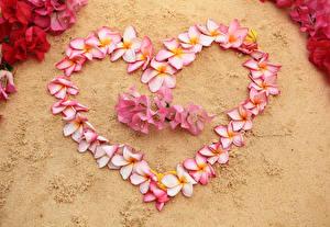 Papéis de parede Dia dos Namorados Plumeria Coração Flores